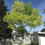 Pleasant Grove UT Tree Service