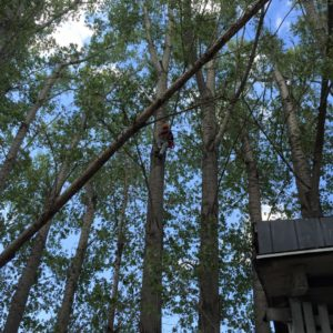 utah-tree-works-tree-service-fb9